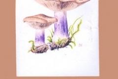 houby_05