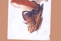 houby_08