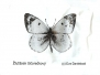 KC - Motýli